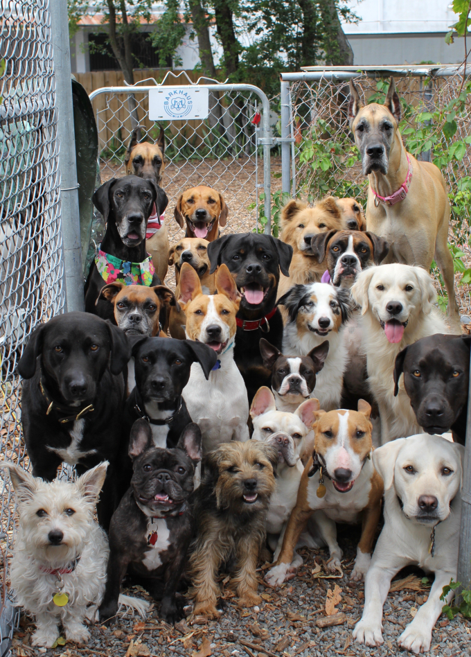 Possibly the best doggy daycare photo ever taken 😂