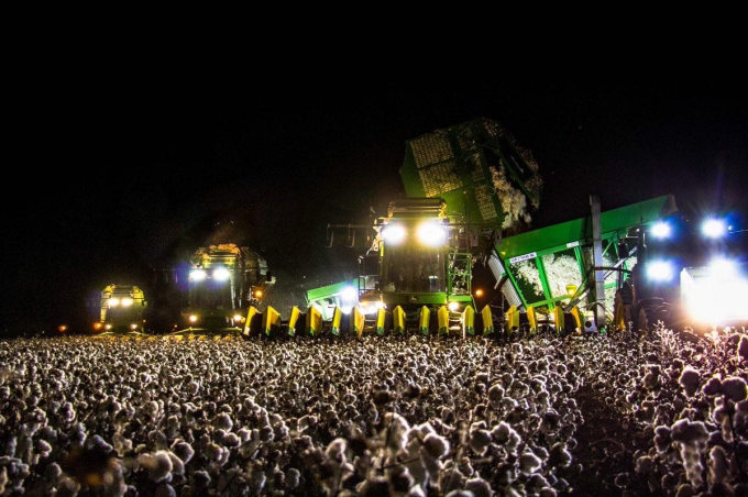 Cotton picker at night looks like a huge concert crowd