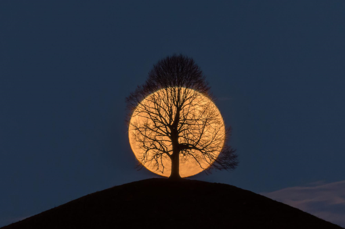 Moon rising behind a tree :)