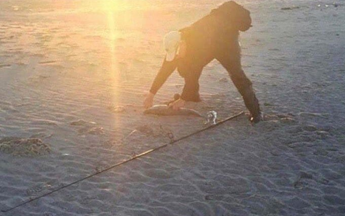 Not a gorilla walking on the beach :P